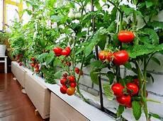 potager vertical balcon how to start a balcony vegetable garden growing
