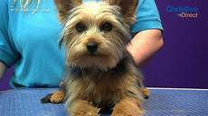 grooming guide yorkshire terrier puppy trim pro groomer youtube