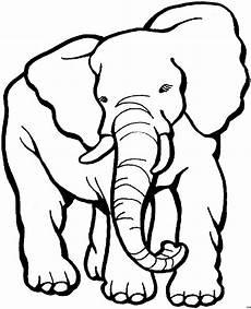 grosser elefant 2 ausmalbild malvorlage tiere