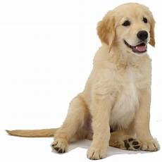 benefits of zinc chelates in pet animals norel nutrici 243 n