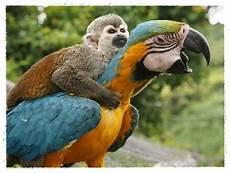Gambar Burung Yang Lucu Dan Bisa Berbicara Dunia Binatang