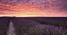 purple nature 4k wallpaper 15 best nature wallpapers in 4k and hd for desktop