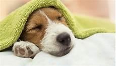 Hundegeruch Entfernen Wohnung - hundegeruch in der wohnung neutralisieren hunde