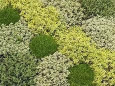 5 Cl 233 S Pour R 233 Ussir Un Gazon De Plantes Couvre Sol