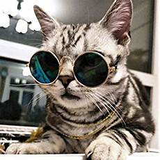Katze Mit Sonnenbrille - cool stylish and pet sunglasses