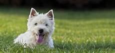 comment choisir mon chien test infos pour trouver le bon