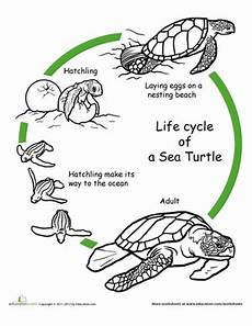 animal cycle worksheets 13938 color the cycle turtle cycles turtle cycle cycle craft