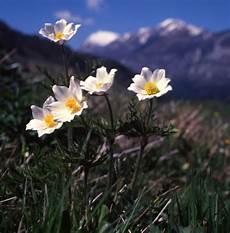 fiori e primavera rinascita della vita