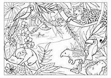 free coloring pages of animals in the rainforest 17397 color by number toucan child worksheets and number