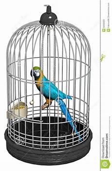 pappagallo in gabbia uccello pappagallo in una gabbia fotografia stock