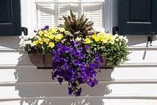 blumenkasten bepflanzen ideen bilder las flores de pepilo tips para planificar las macetas