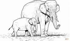 indian elephant baby and coloring page elephant