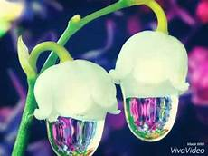 Les Plus Belles Fleurs De Monde