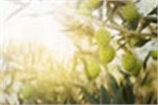 olivenbaum schneiden anleitung