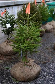 put roots this year with a sustainable tree