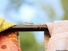 Die Besten Und Effektivsten Hausmittel Gegen Ameisen In