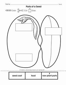 plants and seeds worksheets for kindergarten 13631 parts of a seed lesson plans the mailbox parts of a seed plant cycle worksheet