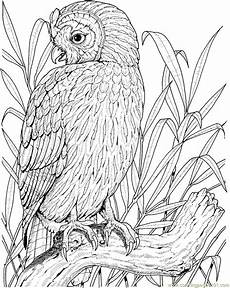 Gratis Malvorlagen Eulen Free Color Pages Owls Free Printable Coloring Page Owl
