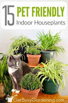 giftige zimmerpflanzen baby 15 indoor plants that are safe for cats and dogs gardens