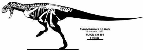 Carnotaurus  Paleontology World