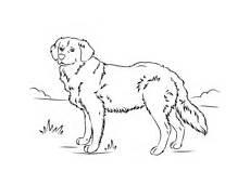 Ausmalbilder Hunde Golden Retriever Ausmalbilder Hunde Malvorlagen Kostenlos Zum Ausdrucken