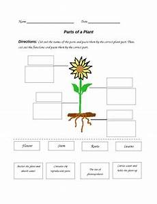 parts of the plants worksheets for grade 1 13716 parts of a plant worksheet by paula jett teachers pay teachers
