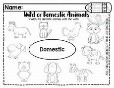 worksheets on domestic animals for grade 1 14267 or domestic animals by from martz to class tpt