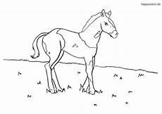 ausmalbilder pferde rassen ausmalbilder pferde kostenlos 187 malvorlage pferd