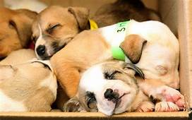 Why Are Babies And Puppies So Cute Oxford Researchers