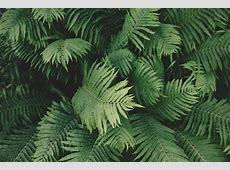 Ferns Images · Pixabay · Download Free Pictures