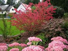 pflanzen für trockene schattige standorte umgestaltung eines vorgartens mein sch 246 ner garten forum