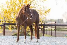 wie viel kostet ein eigenes pferd diaries