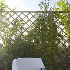 cloture treillis bois panneau treillis bois ajour 233 sonato l 180 cm x h 180 cm