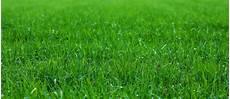 Rasen Neu Anlegen Ohne Umgraben Vorteile F 252 R Die