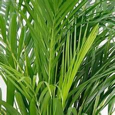 aloe humilis giftig zimmerpflanzen lexikon 123zimmerpflanzen