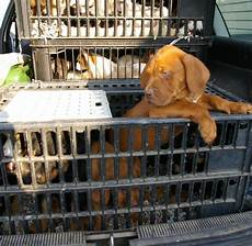 fahrzeughalter ermitteln app illegaler tierhandel das miese gesch 228 ft mit billig