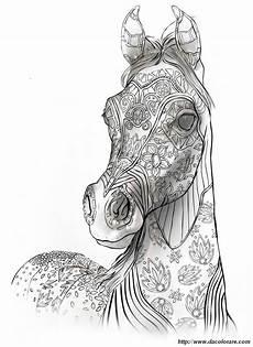 colorare per adulti disegno cavallo arabo