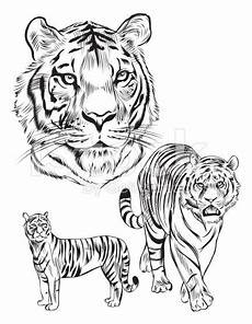 40 awesome tiger line drawing images tutorials etc