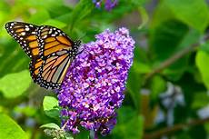 26 flowers and plants that attract butterflies hgtv