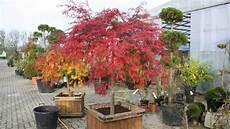 baum für vorgarten der hausbaum muss zum grundst 252 ck passen der richtige baum