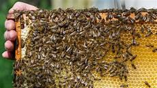 Bienensterben Im Winter Quot Kann Nicht Sagen Dass Die