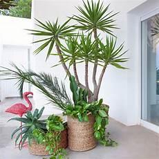 plante d intérieur haute jungle plante verte d int 233 rieur et cache pot d 233 co