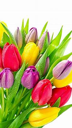 Beautiful Flower Wallpaper Zedge by This Wallpaper Is Shared To You Via Zedge Tulips