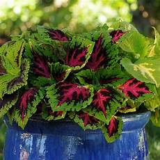 top filler plants hgtv