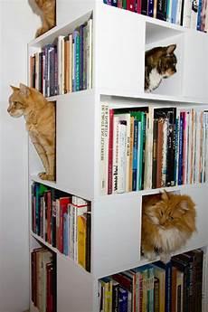 choisir une maisonnette pour chat archzine fr