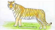 Kumpulan Gambar Mewarnai Harimau