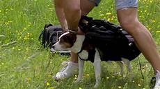mit hund hundetransportrucksack auch geeignet zum tragen f 252 r kinder