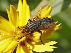 chasser les mouches 10 astuces pour chasser les mouches