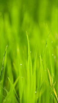 grass flower wallpaper iphone nk13 lawn flower bokeh green iphone 6 plus