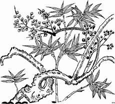 pflanze im urwald ausmalbild malvorlage blumen